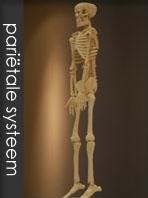 Osteopathie Maastricht Rademaker Osteopaat Maastricht Behandelindicaties zwangeren gewrichten